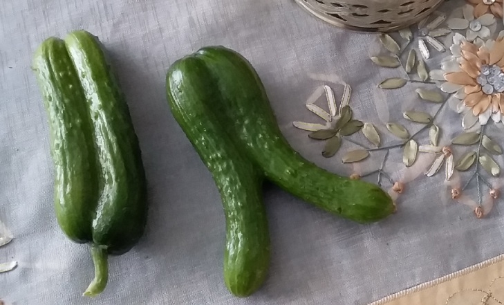 20190330_1-strange cucumbers
