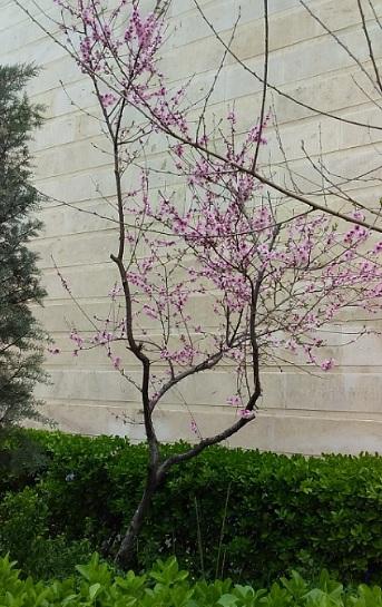 20190331_1-flowers in Sadaf